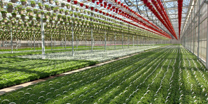 CK Greenhouses - CoBank