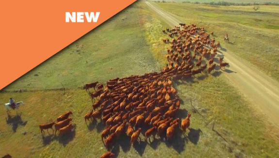 Moxie - Aerial Drone Video Footage